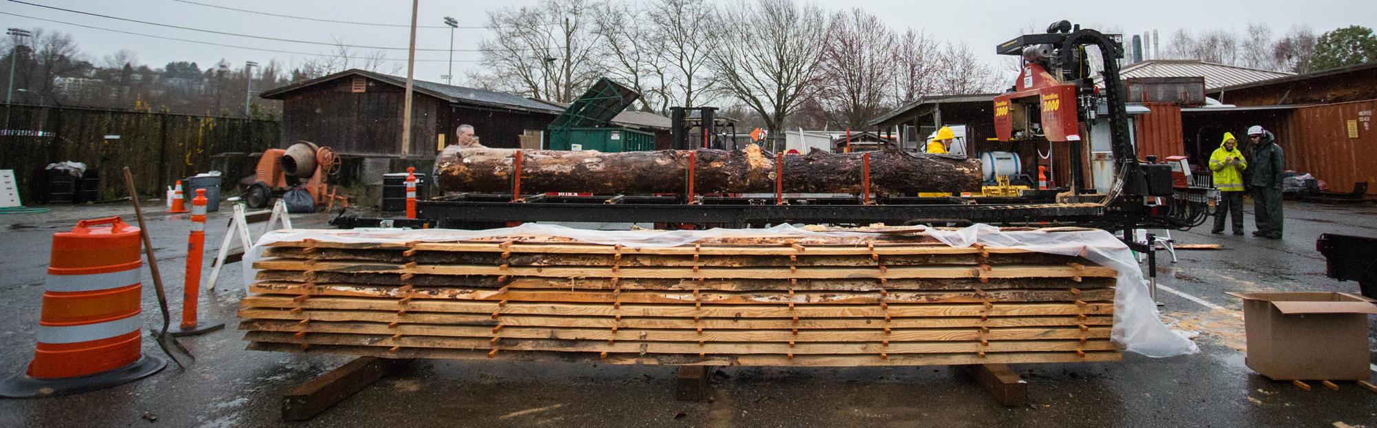 Ponderosa Pine slabs in lumbermill