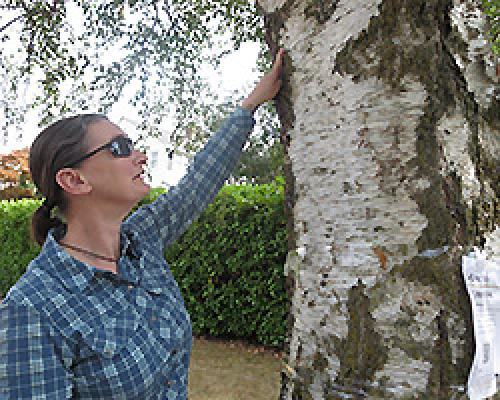 Sara Shores pointing to a birch tree showing evidence of birch borer infestation