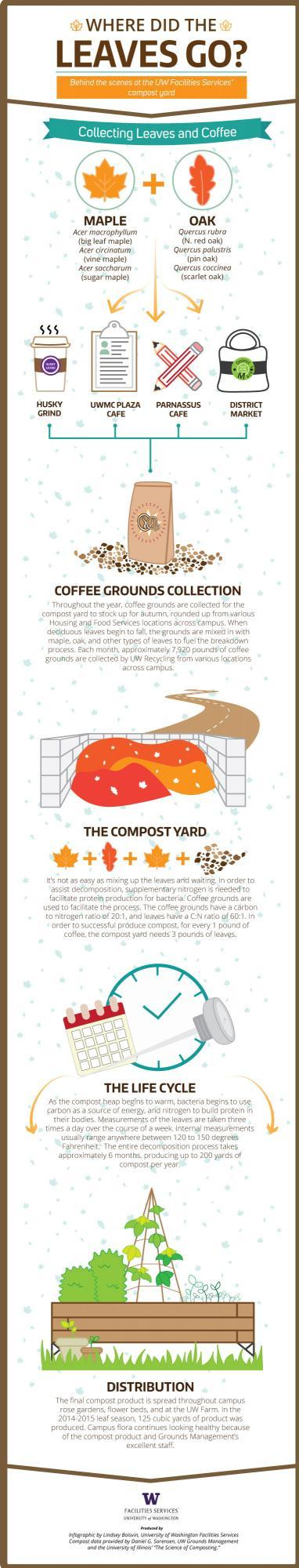 Infofographic: leaf composting