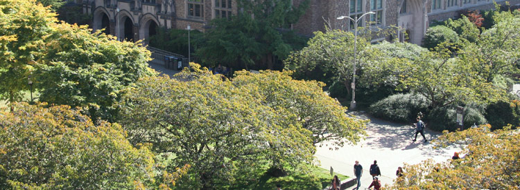aerial view of trees near mary gates hall